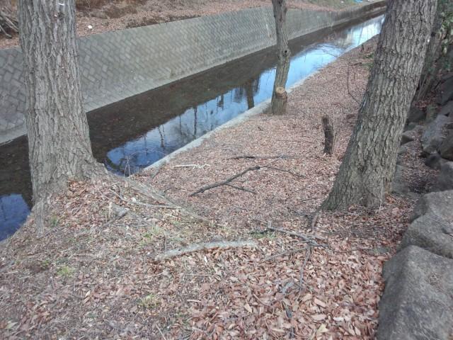 玉川上水の落ち葉