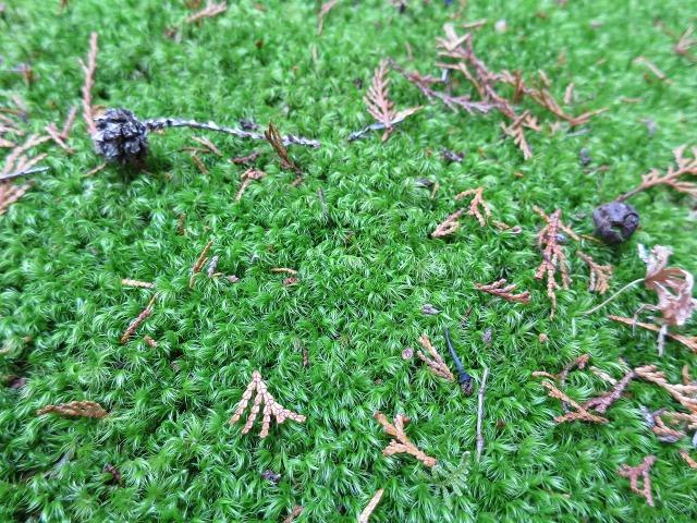 苔寺の緑色の苔