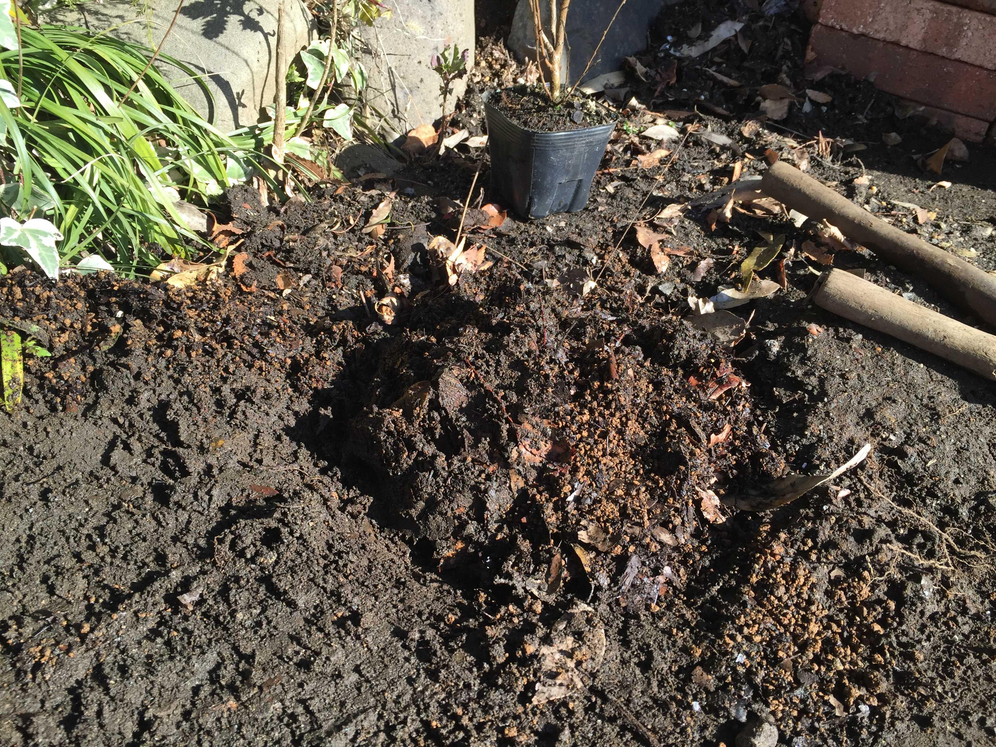 矮性さるすべりの植え穴用土