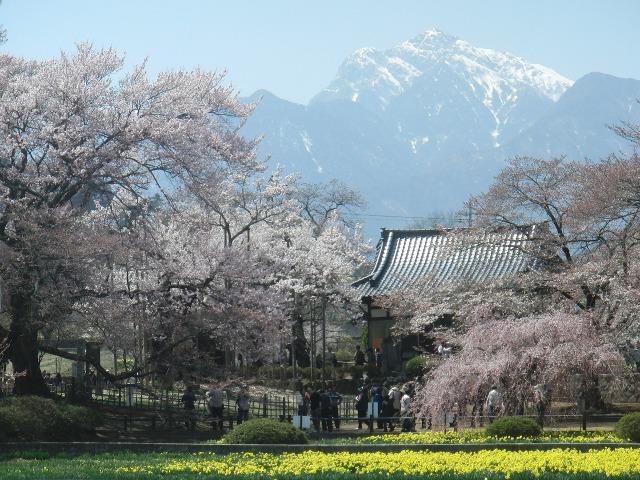 実相寺から見えた甲斐駒(甲斐駒ヶ岳)