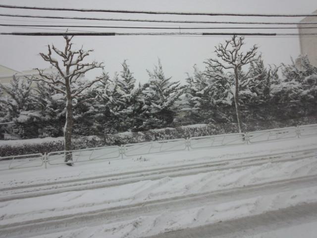 雪で埋まったムラウチドットコム本社前の車道