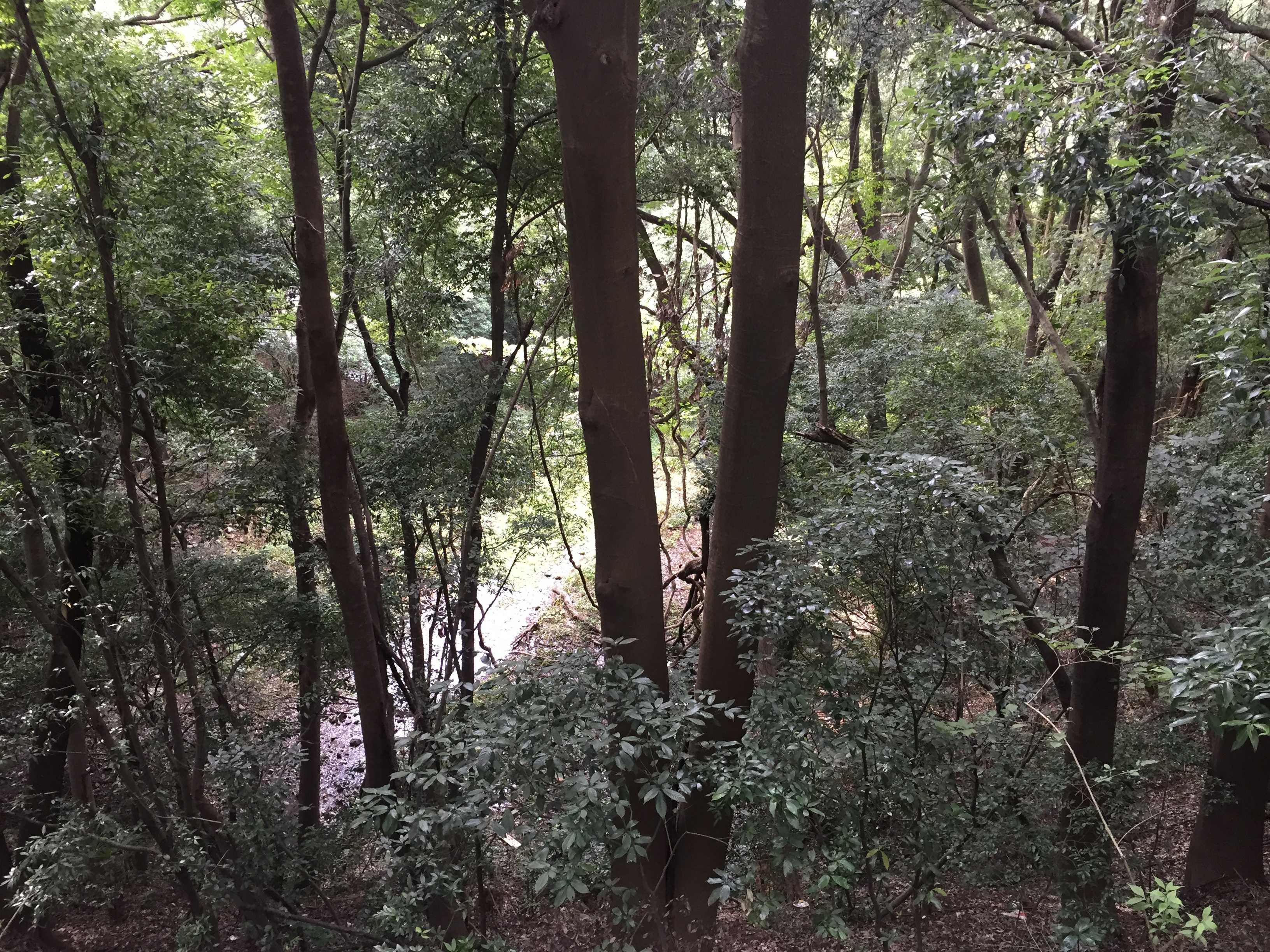 下溝地区あたりの緑地