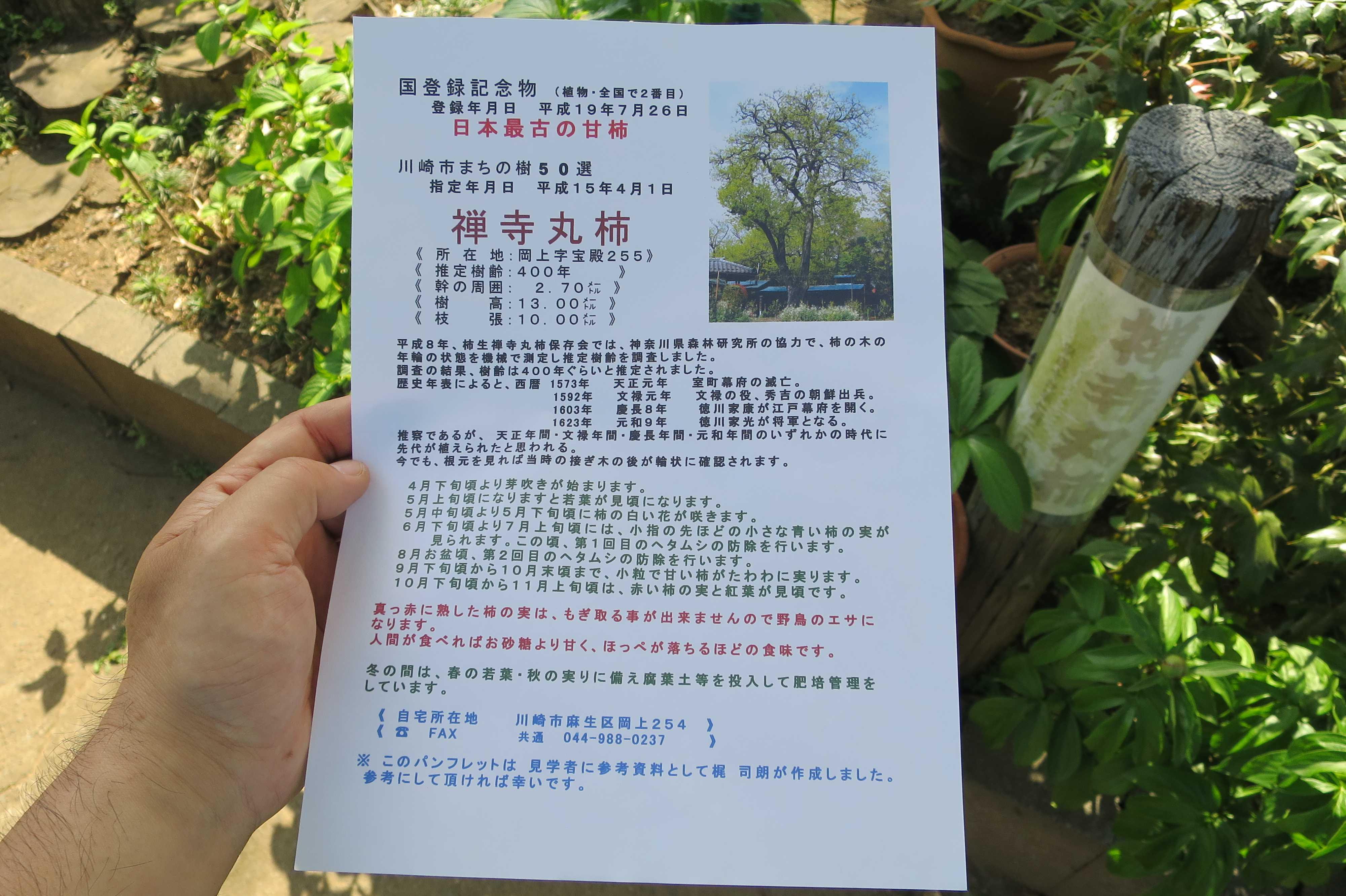 岡上の禅寺丸柿のパンフレット/説明ビラ