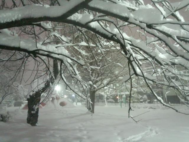 雪が積もった公園の木の枝