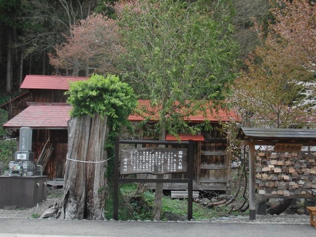 福島県檜枝岐村 - 路傍の大樹