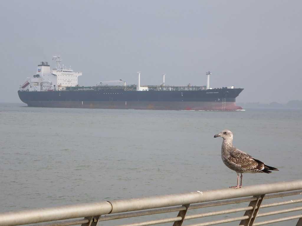 サンフランシスコ湾のタンカーとカモメ
