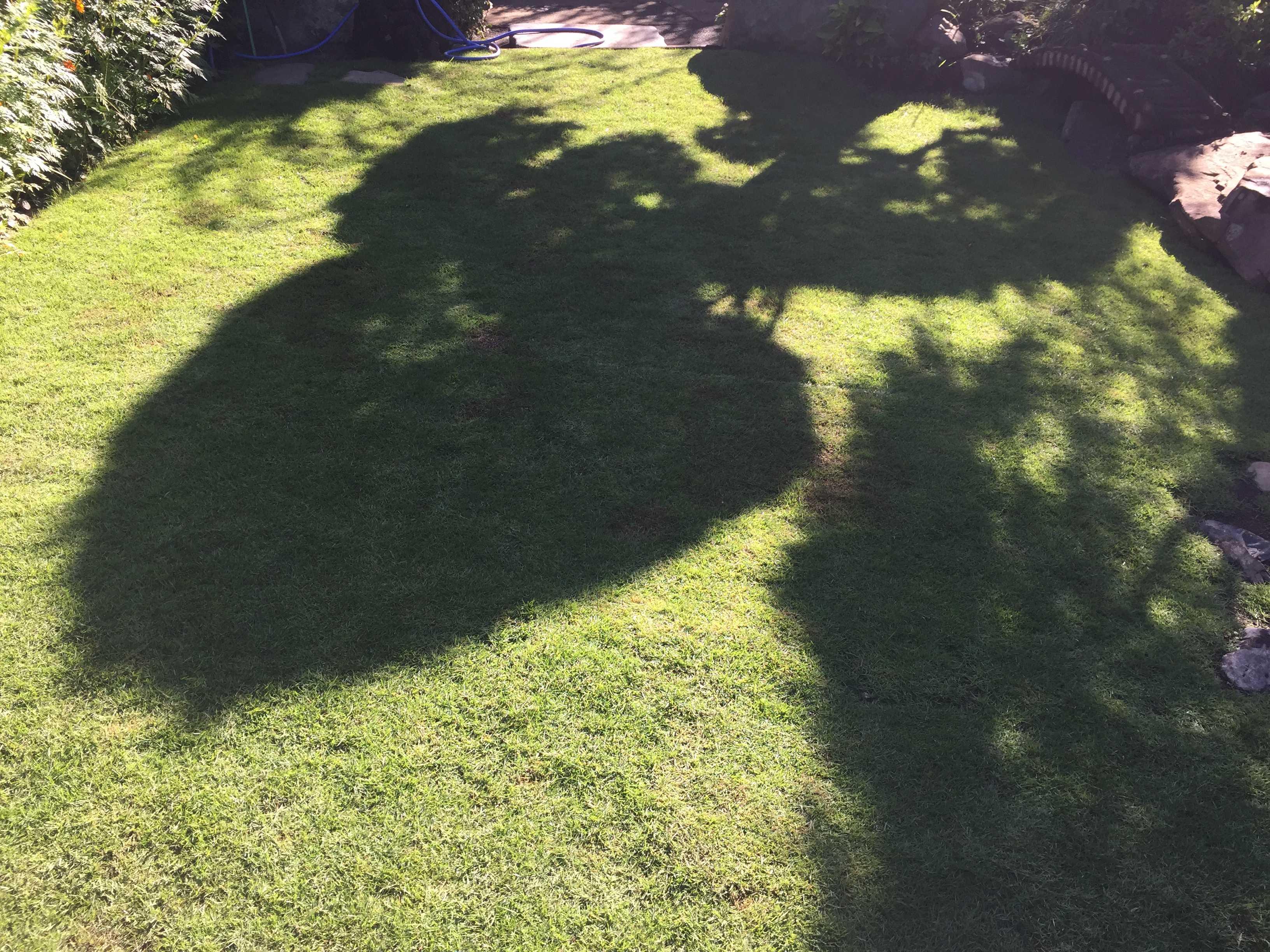 芝生の光と影のコントラスト