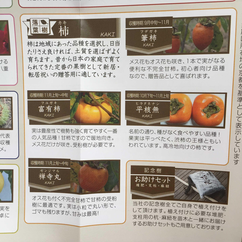 落葉樹 柿(カキ) 収穫時期: 11月上旬~中旬 禅寺丸(ゼンジマル)