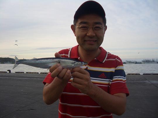 根室・花咲港のサンマ(秋刀魚)