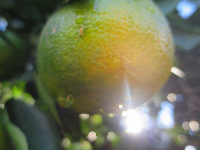 オレンジと日の光