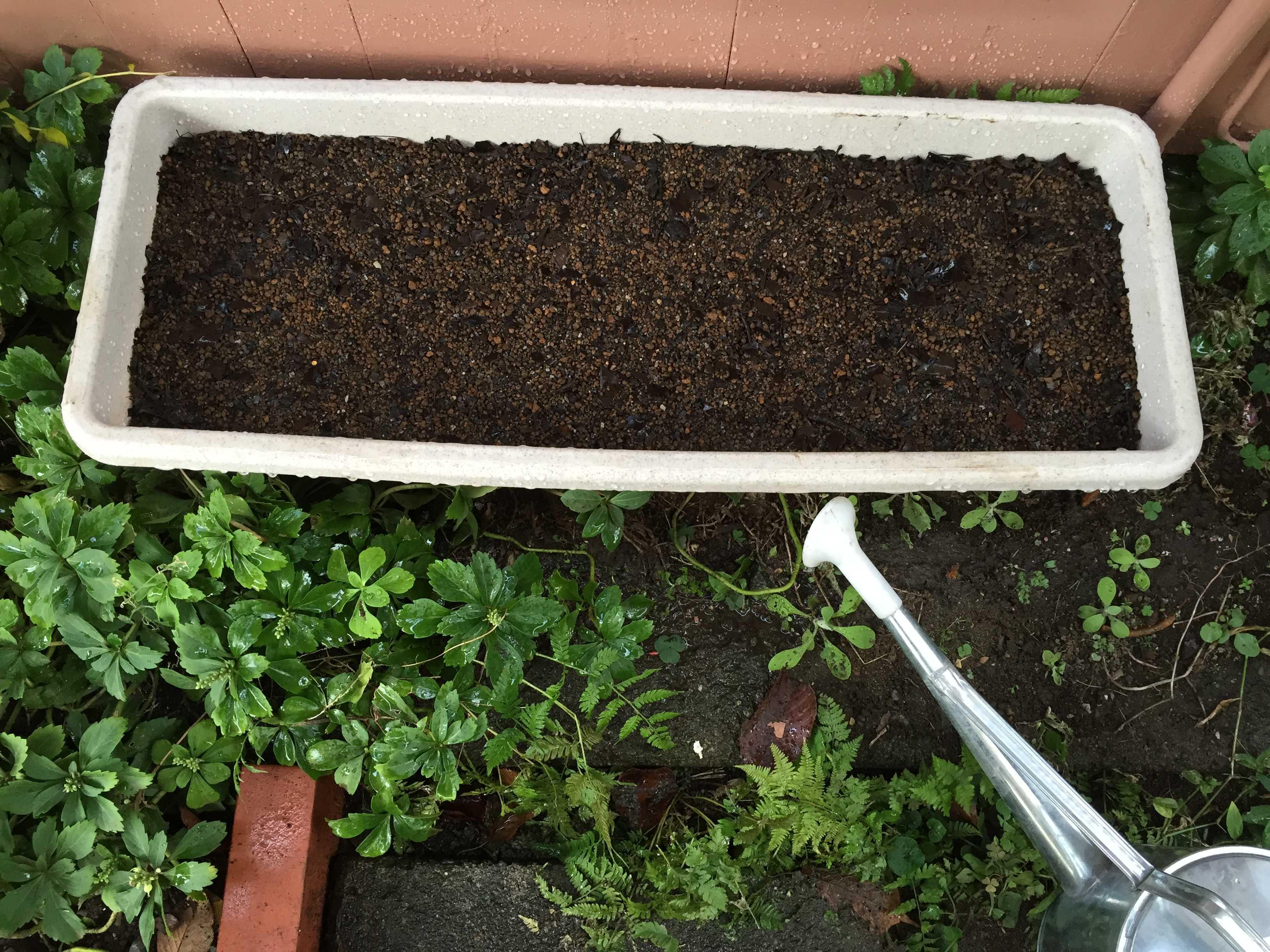 ヤマユリの種子繁殖/実生 - 灌水完了