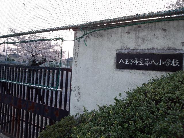 八王子市立第八小学校校庭に咲く桜(百年桜)