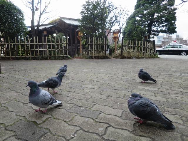 祇園白川沿いの鳩