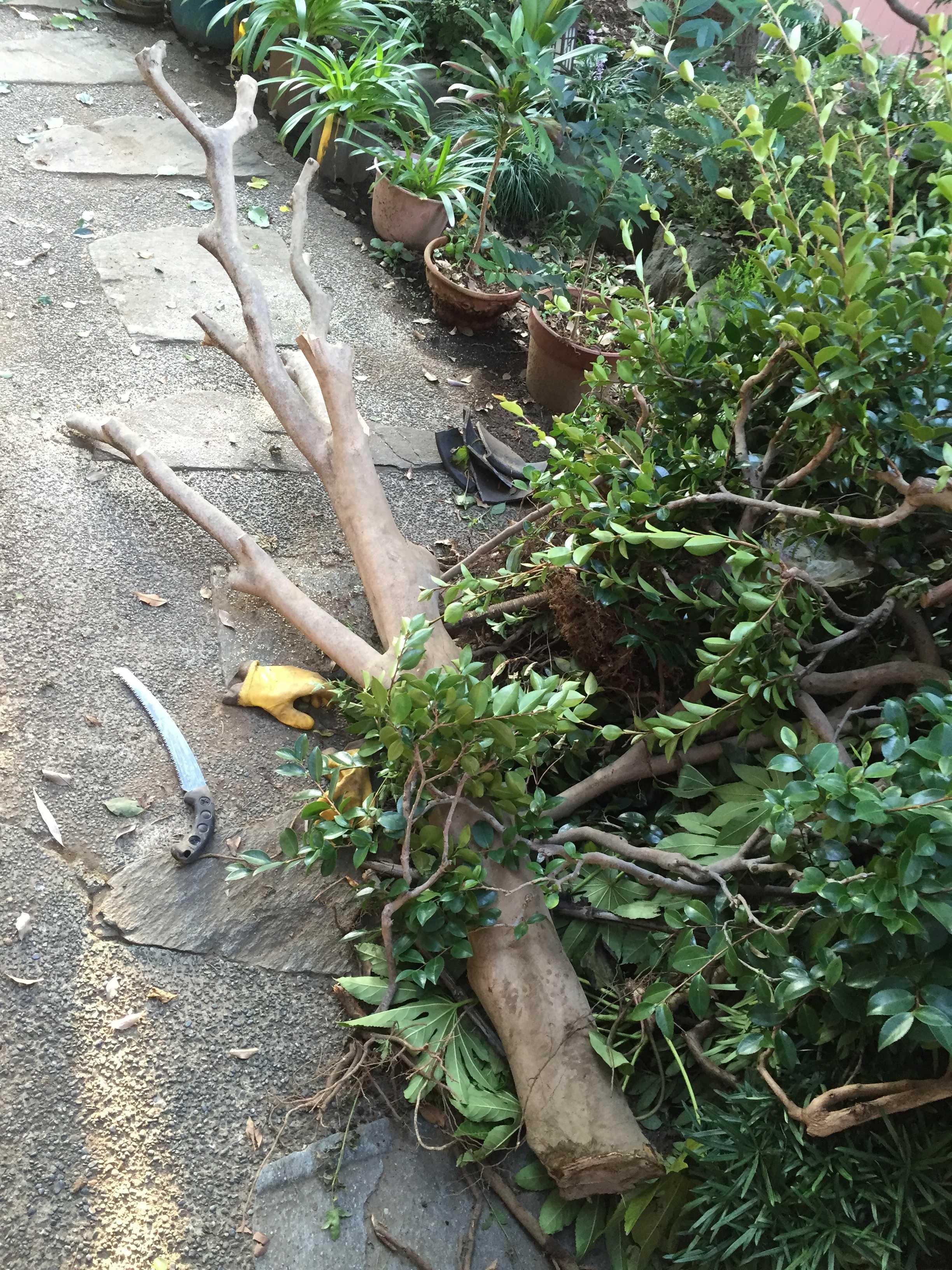 倒した木の枝払い