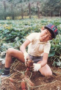 芋掘りをする村内伸弘 昭和53年(1978年)10月