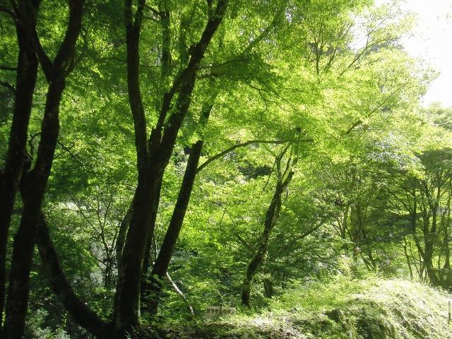 高野山の目に眩しい緑