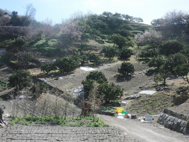 尾道・向島の斜面