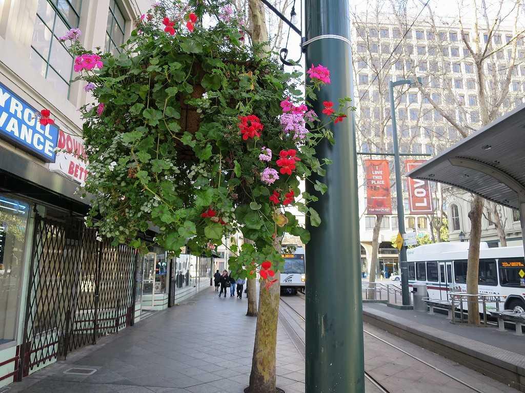 サンノゼ市内の花