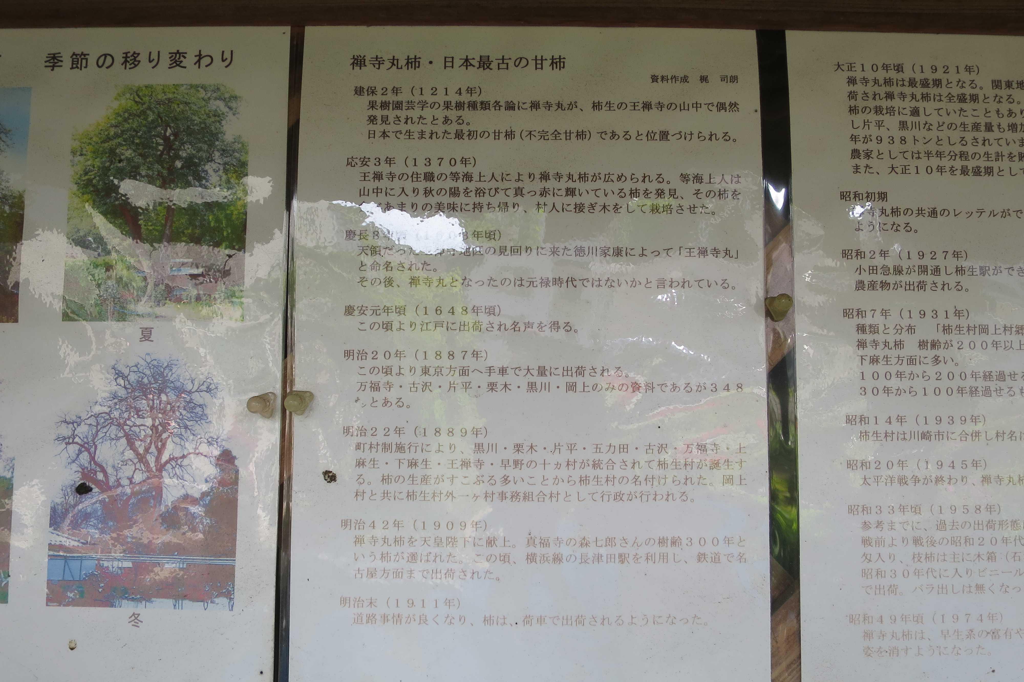 禅寺丸柿・日本最古の甘柿  資料作成 梶 司朗氏