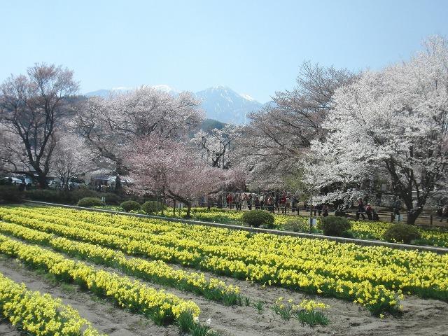 実相寺 - 菜の花と甲斐駒ヶ岳