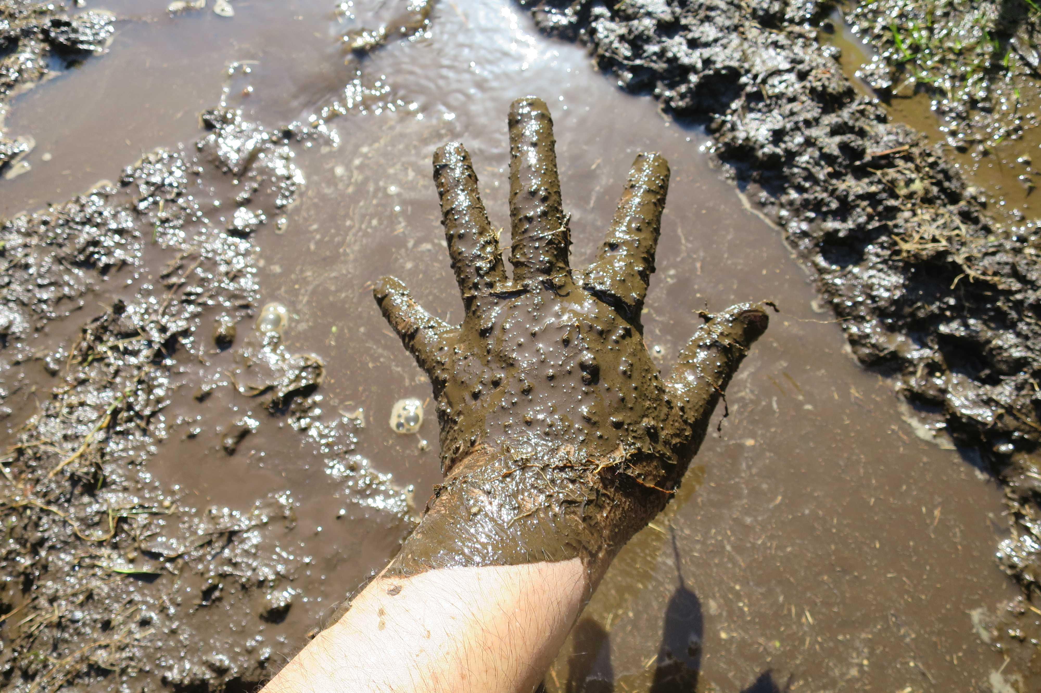 泥まみれの手