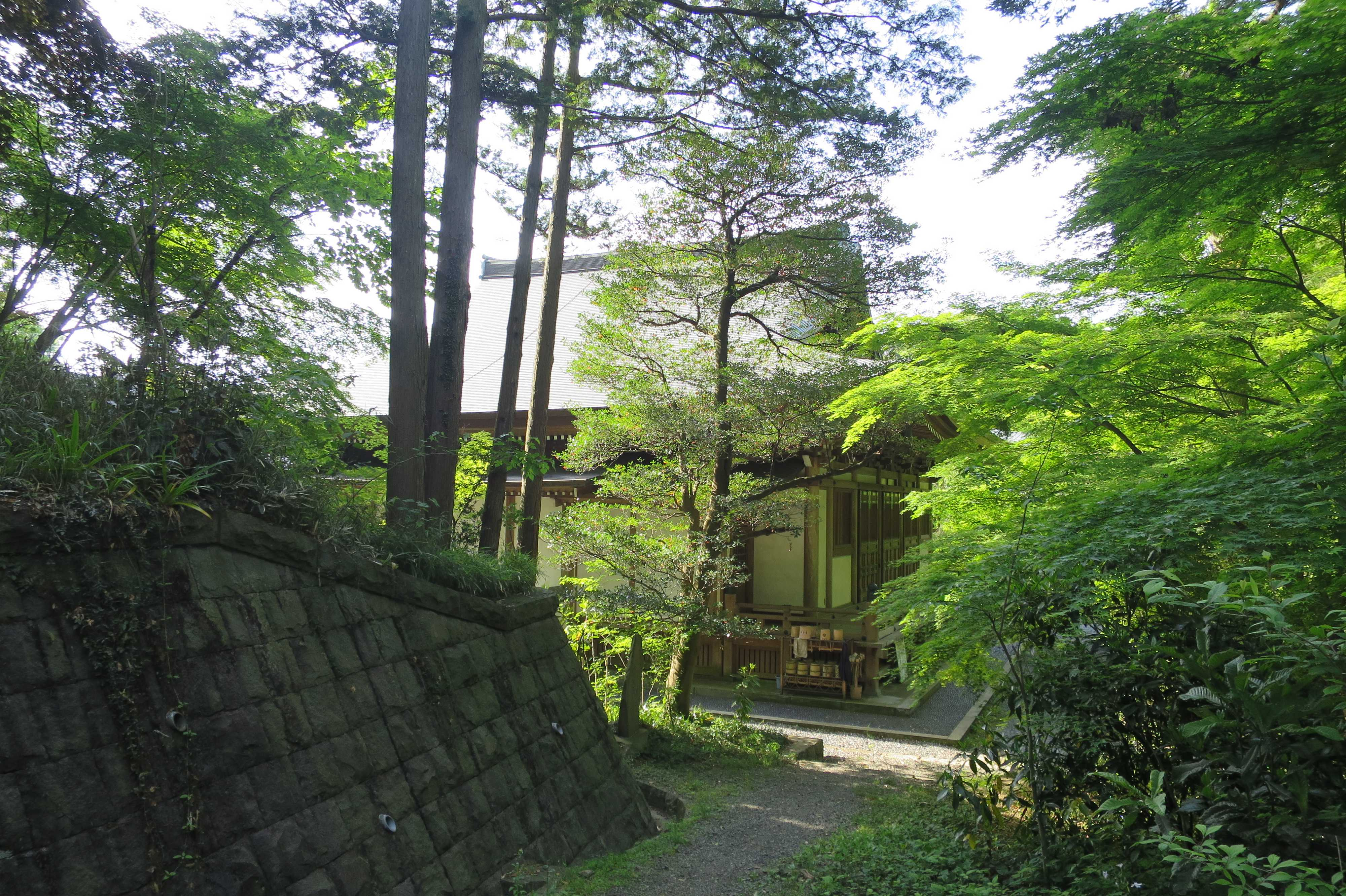 王禅寺境内の新緑
