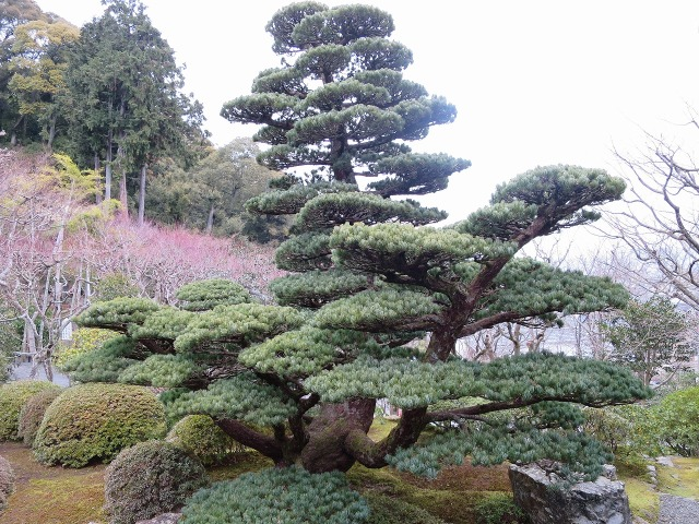鈴虫寺(華厳寺)の庭