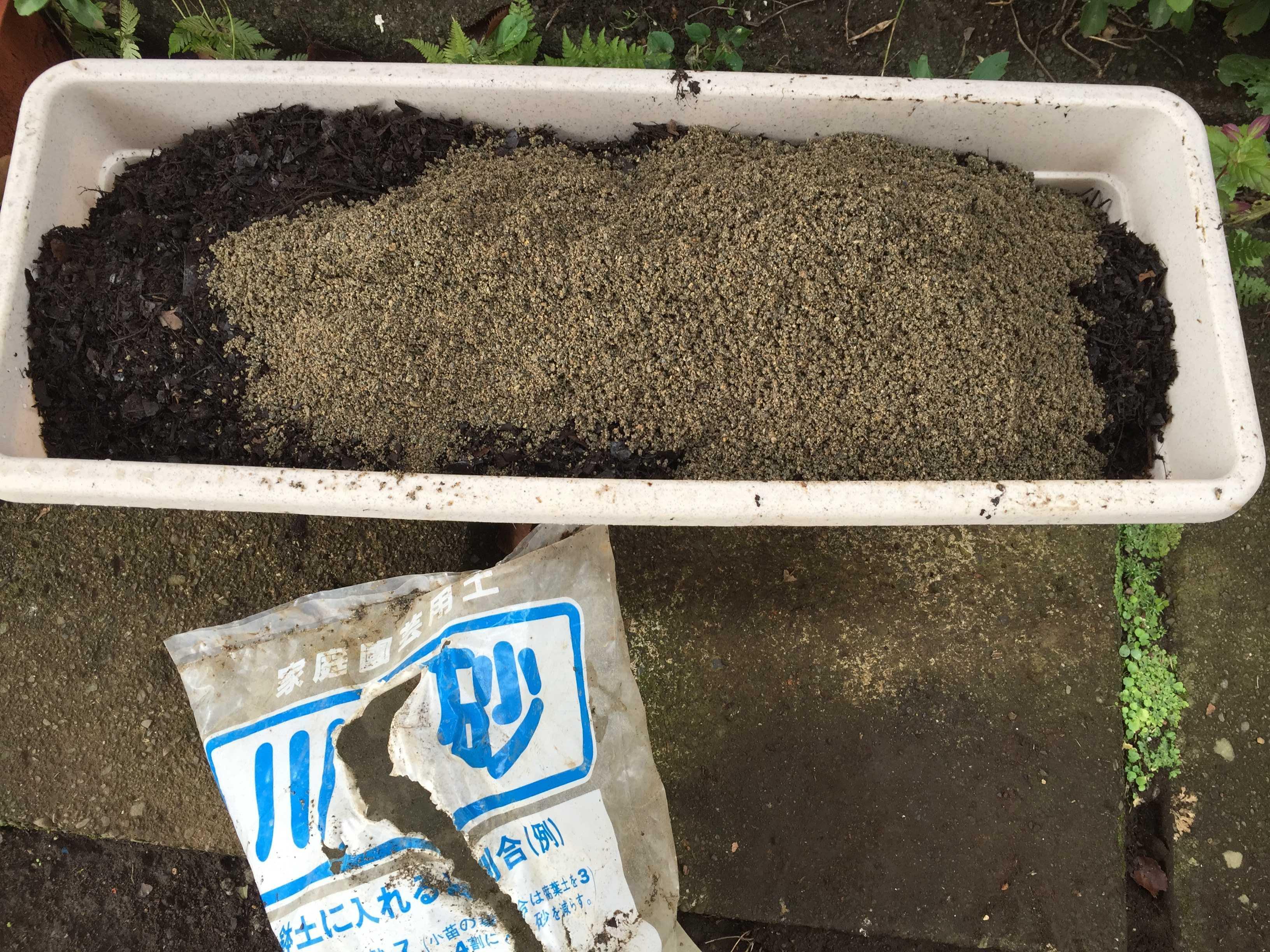ヤマユリの種子繁殖/実生 - 川砂