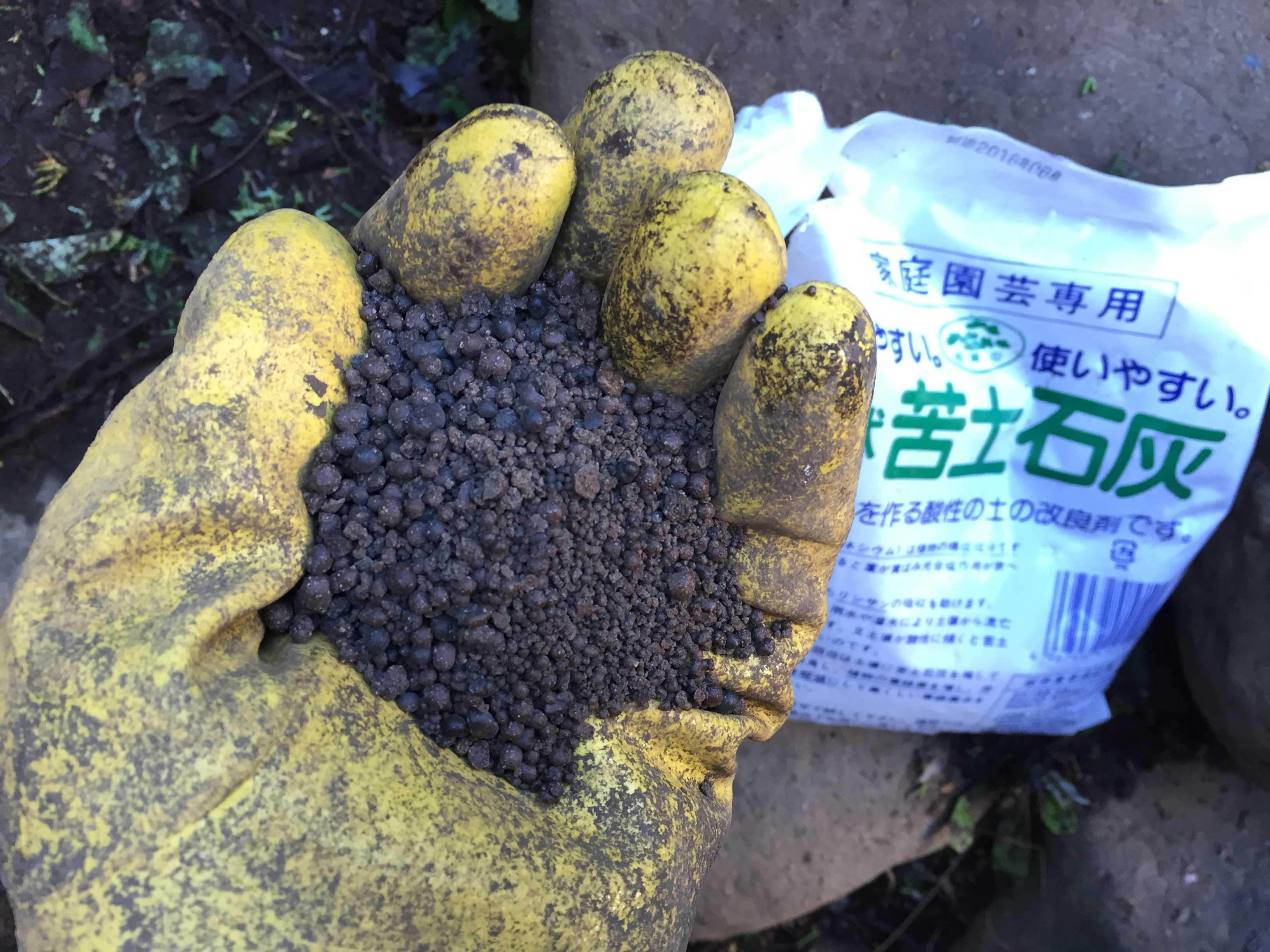 ヤマユリの球根植え付け - 苦土石灰
