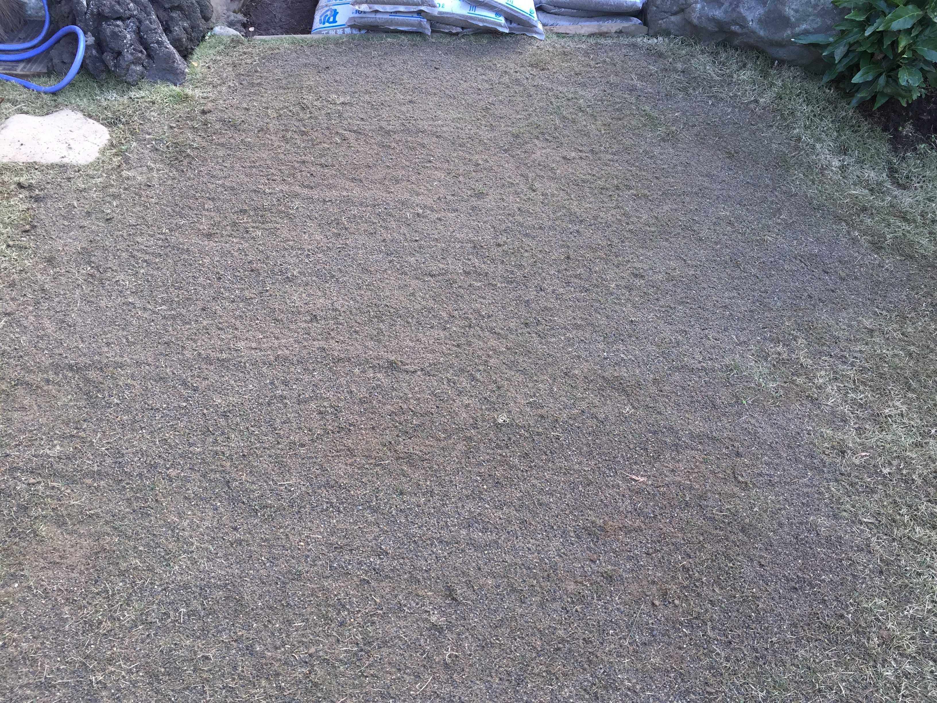 エアレーション&目砂(川砂)入れ&施肥を行った芝生 TM9(ティーエムナイン)