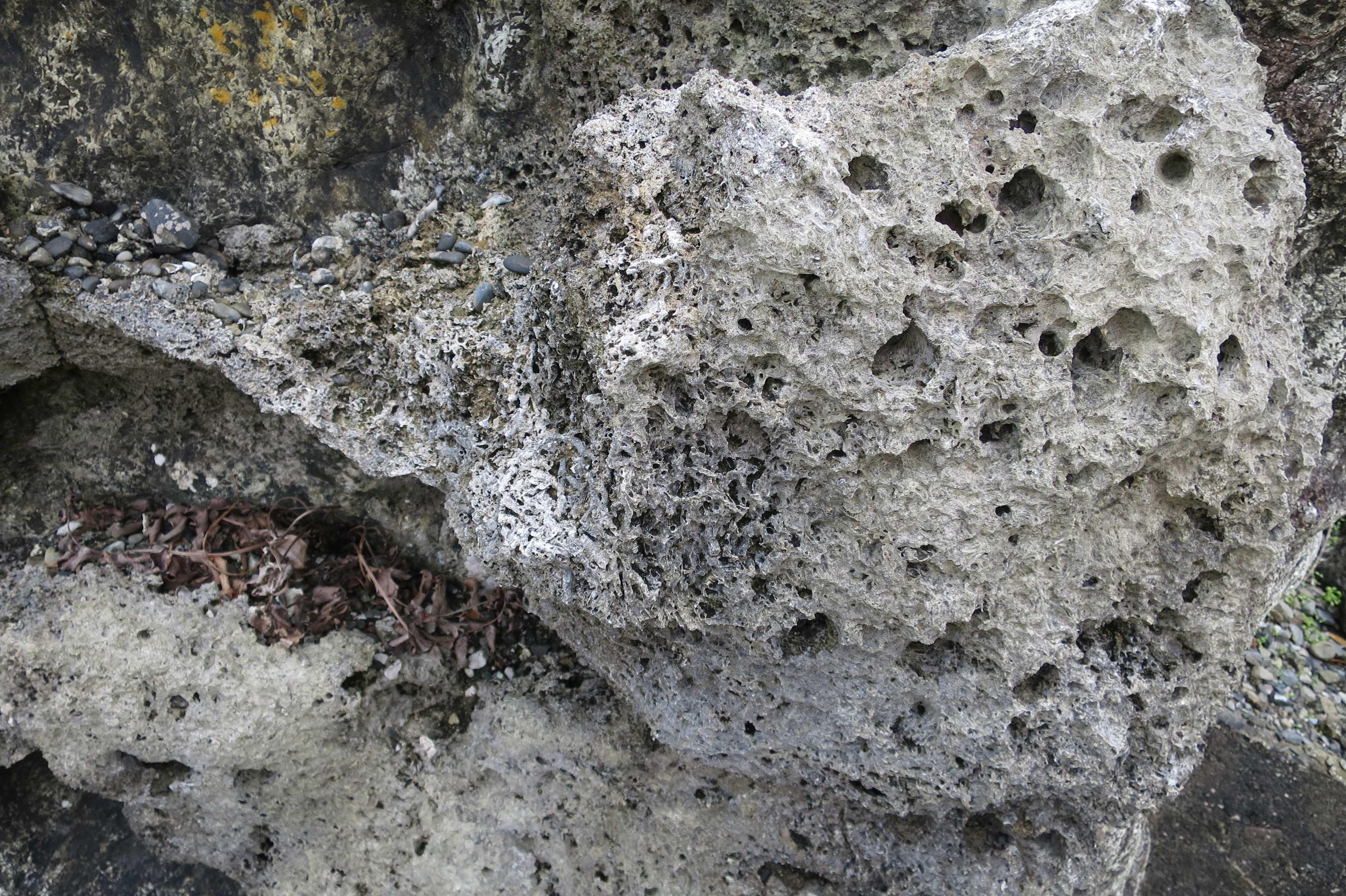 ヤッコカンザシの巣の化石 - 室戸岬 乱礁遊歩道