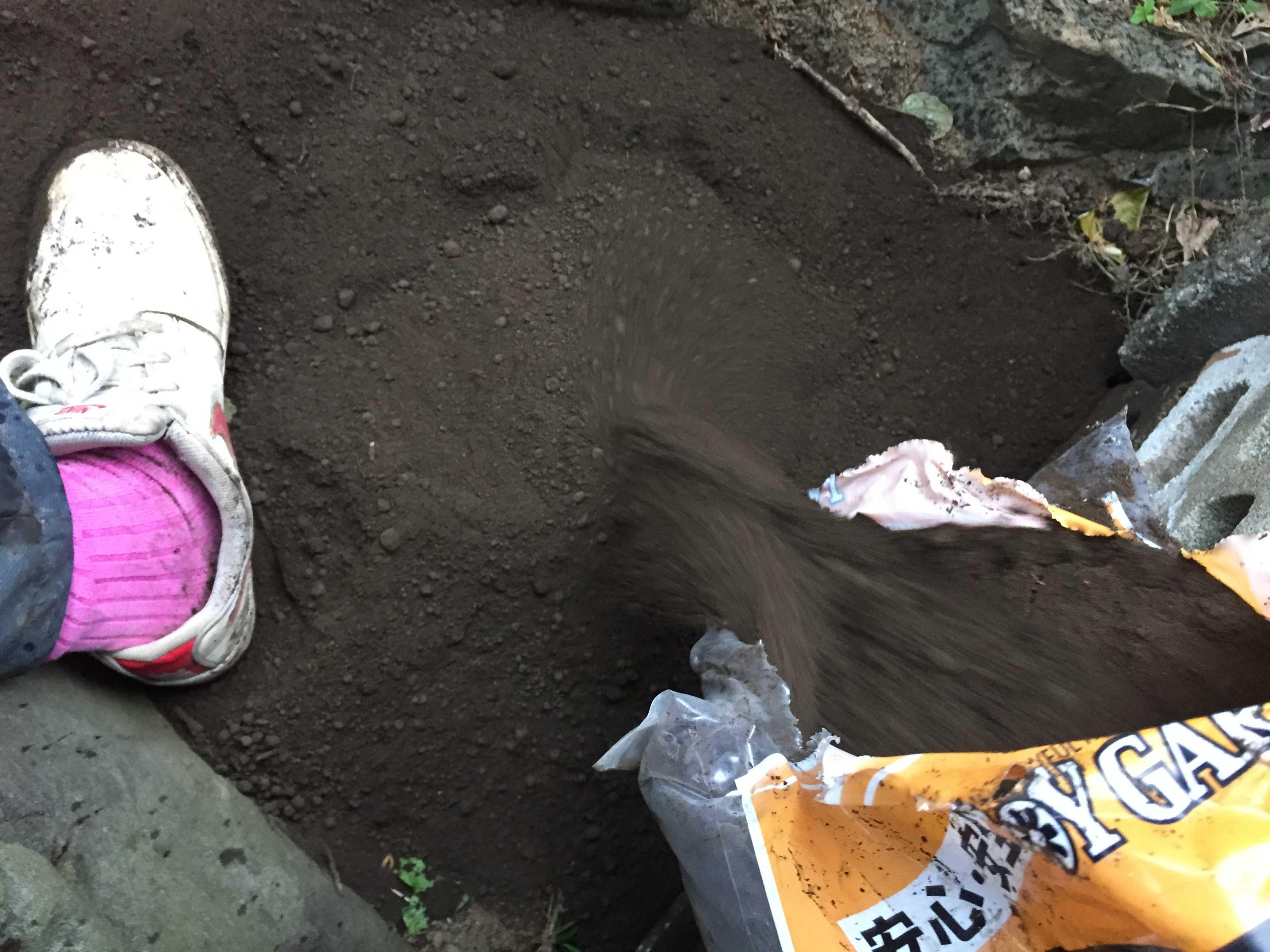 ヤマユリの鱗片定植 - 土壌づくり