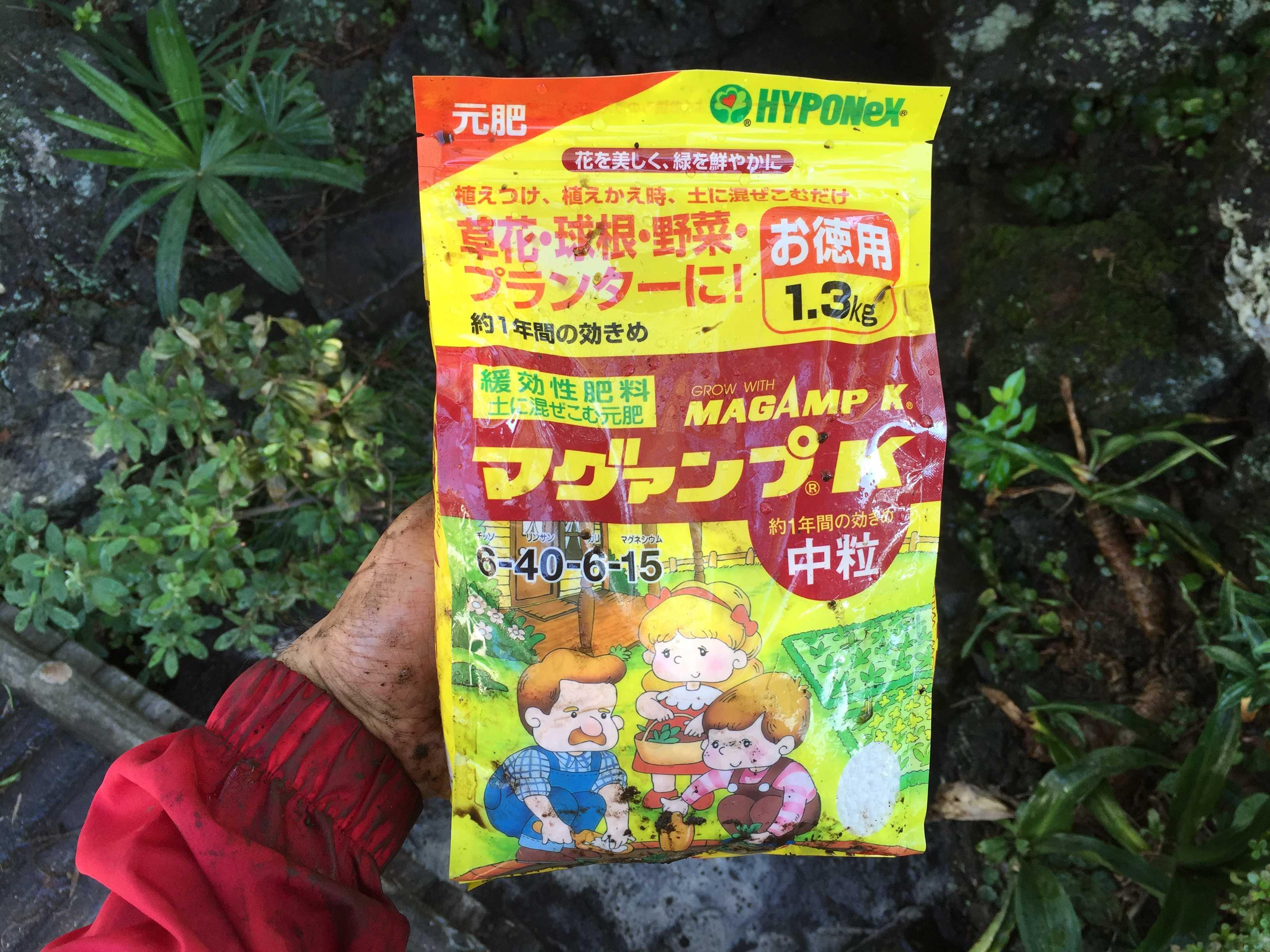 ヤマユリの球根植え付け - リン酸主体の緩効性肥料 マグァンプK(MAGAMP K)