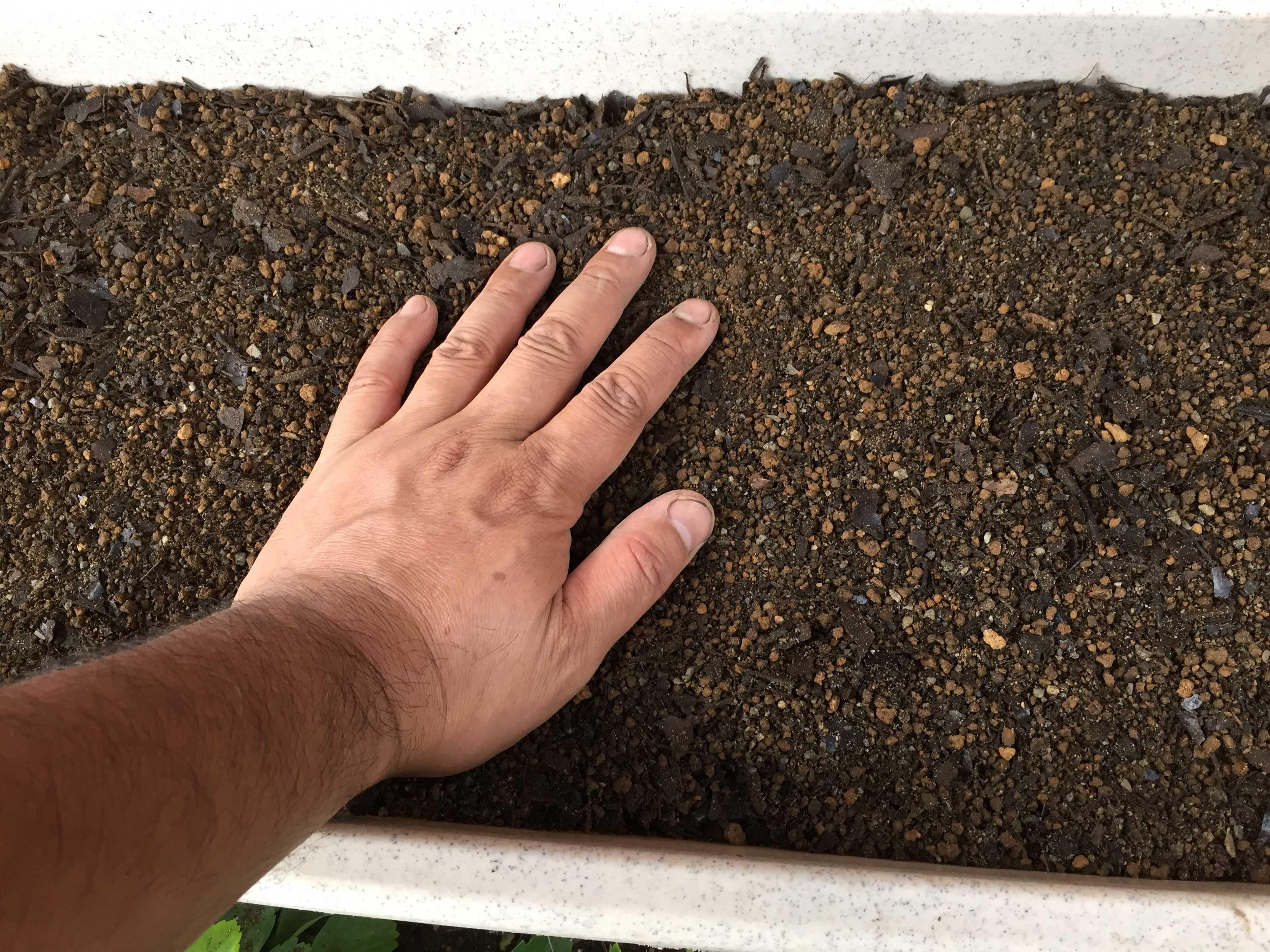 ヤマユリの種子繁殖/実生 - 用土を手で押して覆土