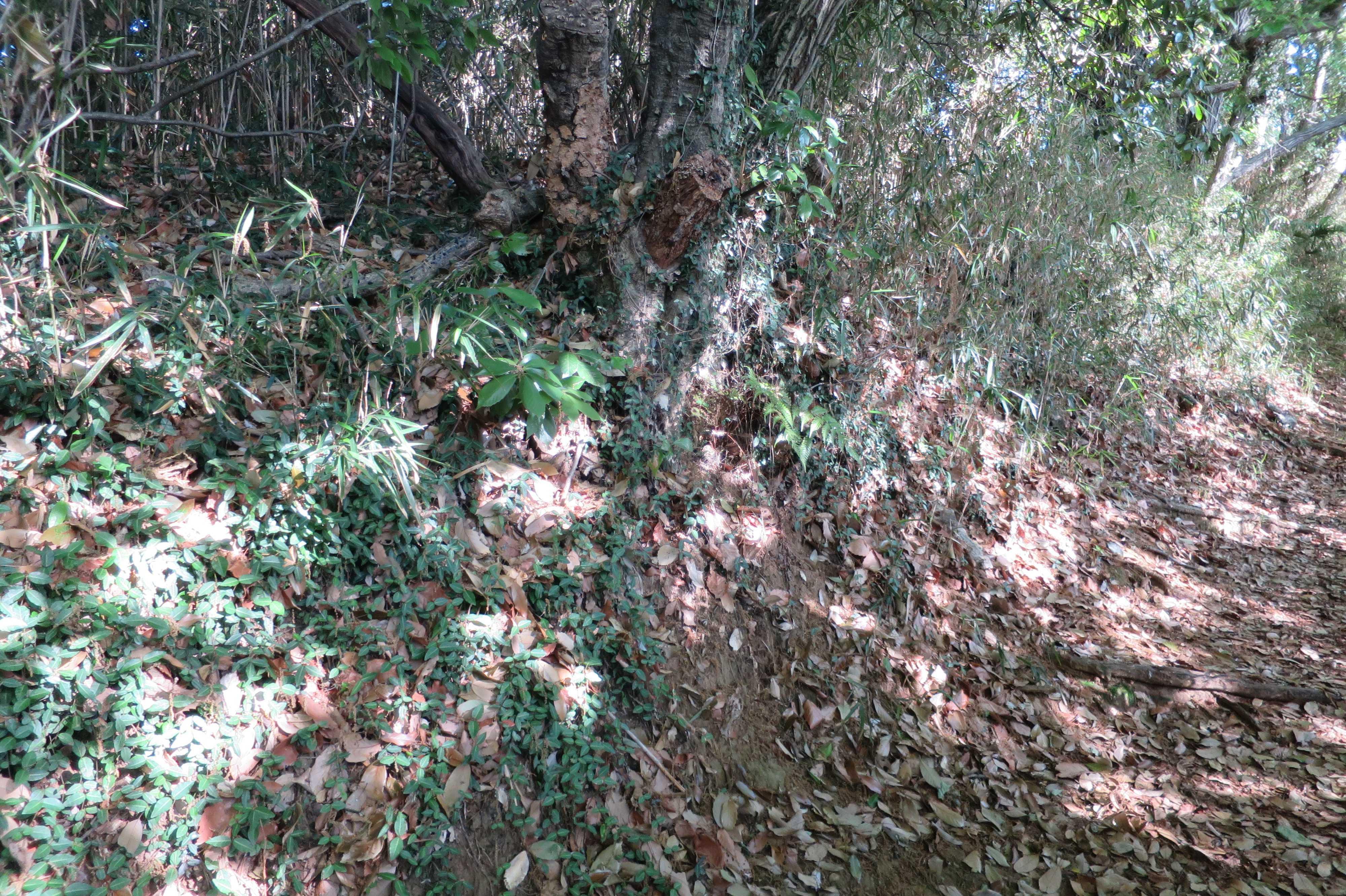 王禅寺ふるさと公園内の木洩れ日