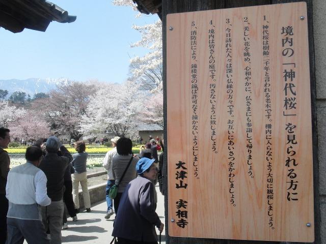 境内の神代桜を見られる方にの看板