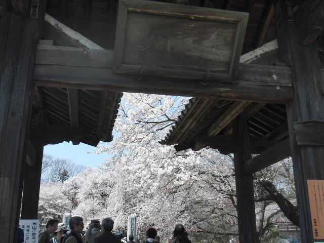 実相寺の桜