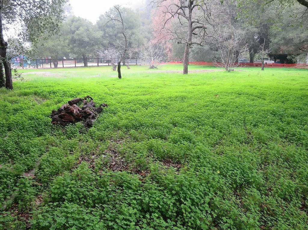 サラトガの緑の空き地
