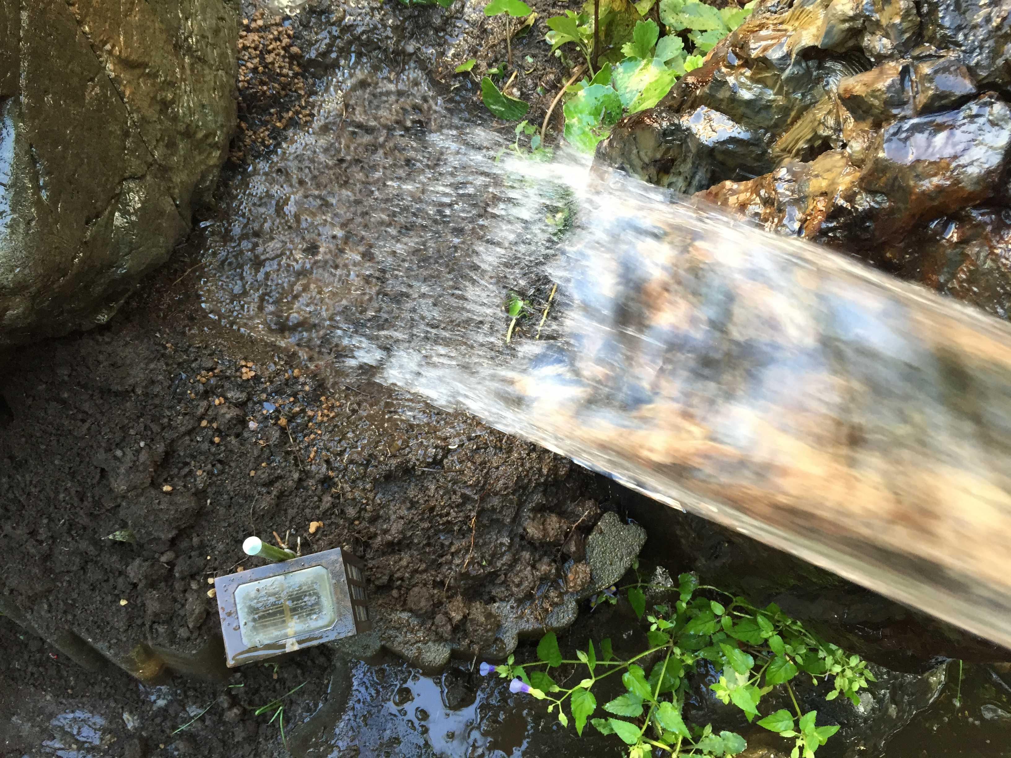 サルスベリ夏祭り(ペパーミントレース)の植え付け用の穴への水やり