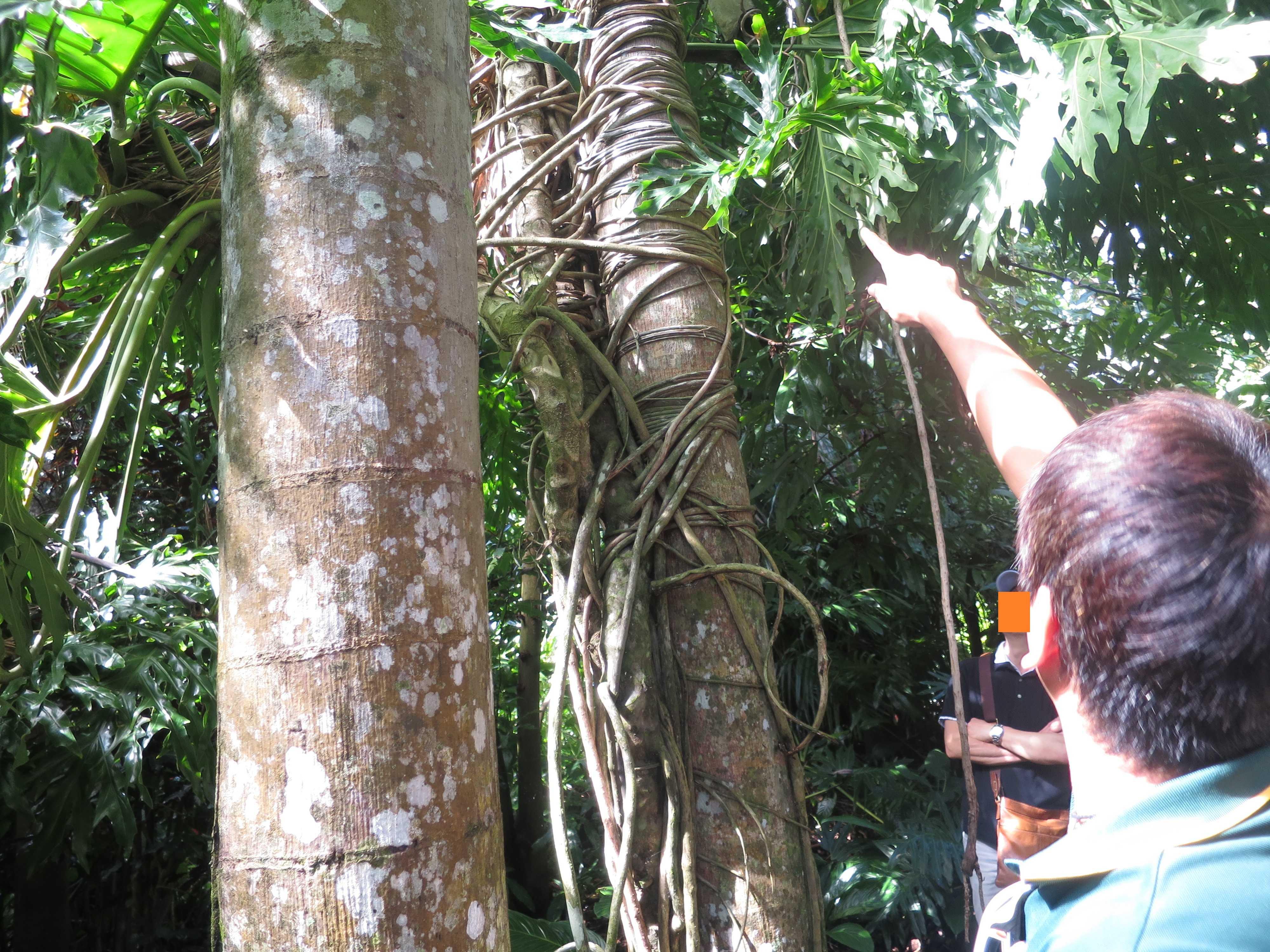 熱帯雨林の着生植物