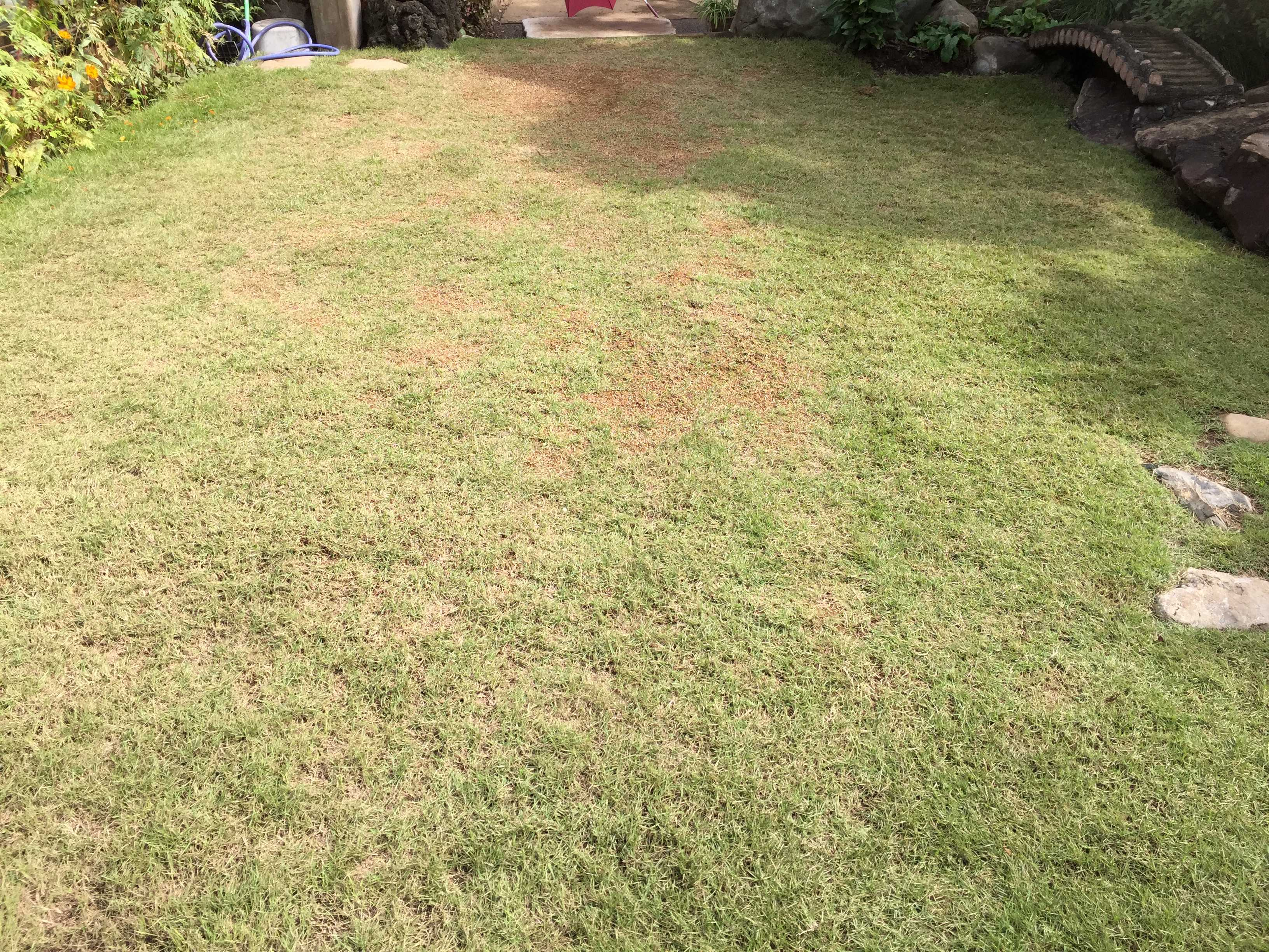 TM9 - 貼り付け後 4ヶ月。茶色くなった芝生・TM9(ティーエムナイン)