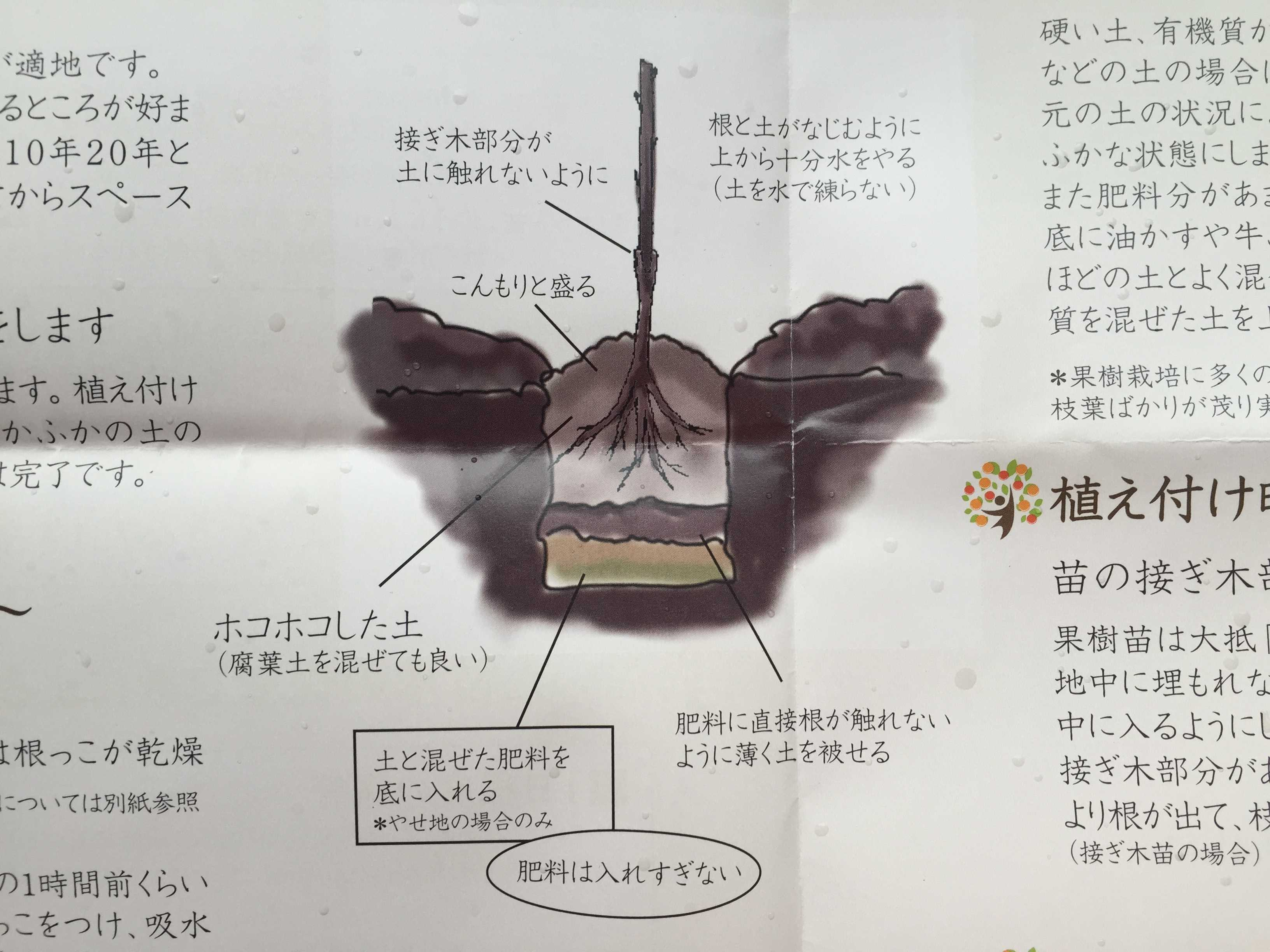 禅寺丸柿の植え付け方法
