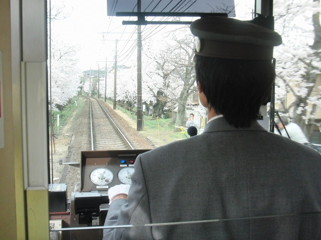 嵐電(京福電鉄)の桜のトンネル