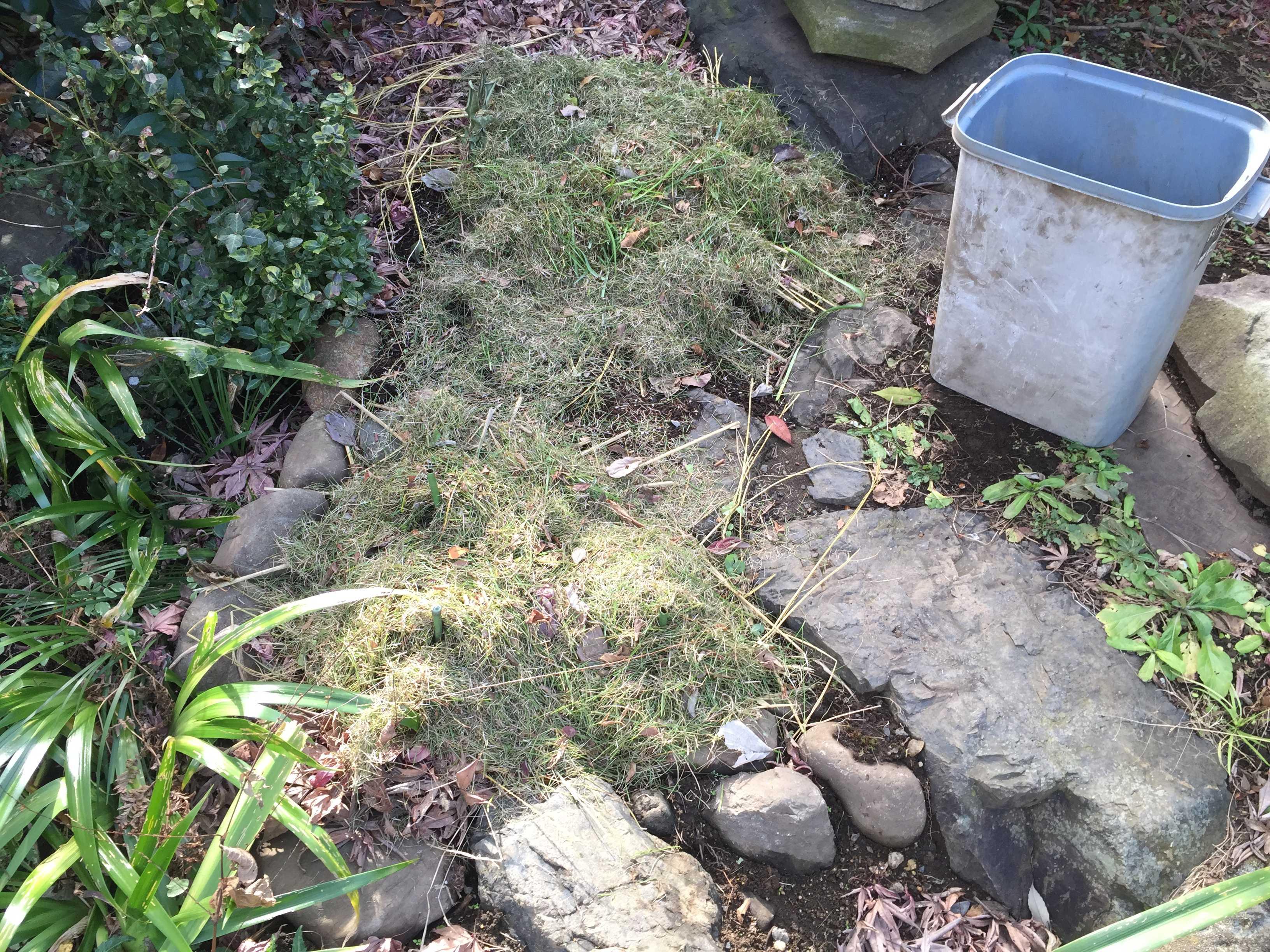 刈った芝マルチ(芝生マルチング)