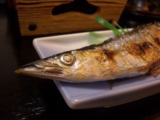 根室・花咲港のさんま(秋刀魚)