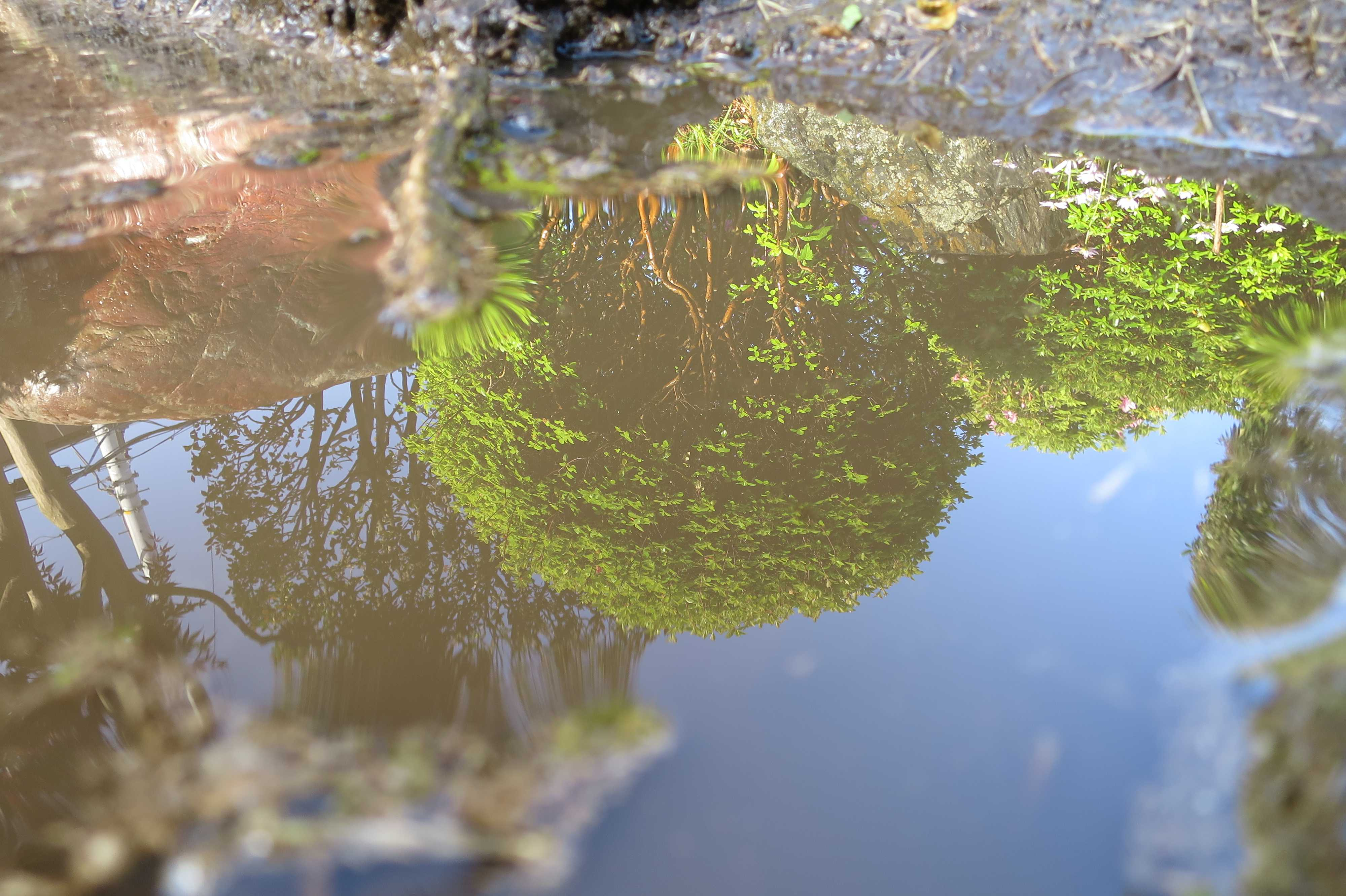 水たまりに映った緑の木々
