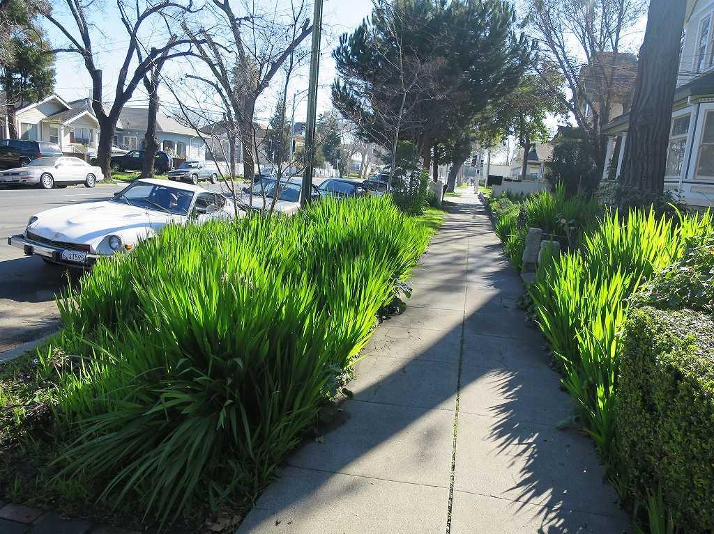 サンノゼ - 輝く緑の草