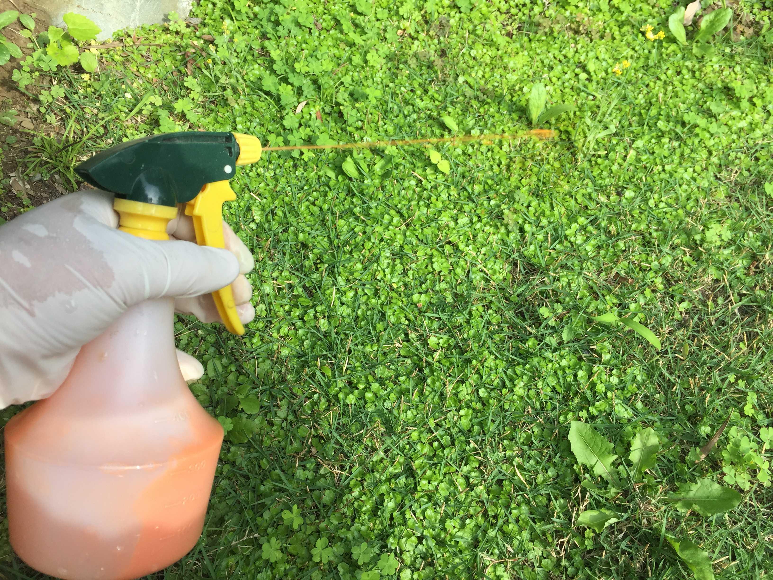 苔 除去 芝生