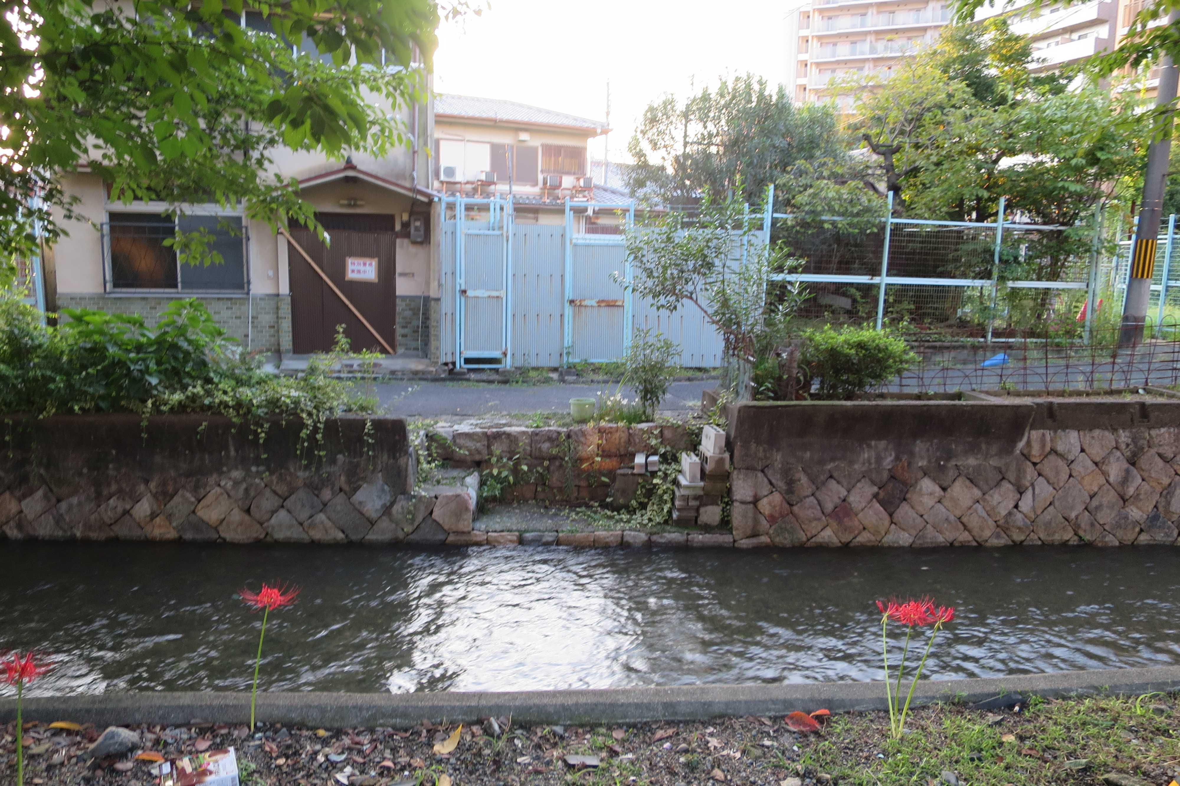 京都・崇仁地区 - 曼珠沙華(彼岸花)と高瀬川