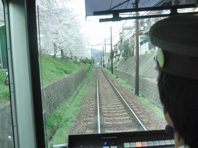 嵐電(京福電鉄)沿線の桜